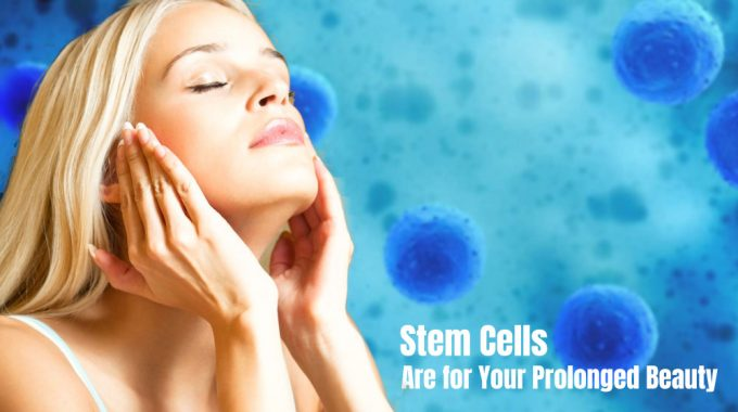 Stem Cells Are for Your Prolonged Beauty